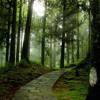 Dự án khôi phục rừng của tập đoàn Điều hòa